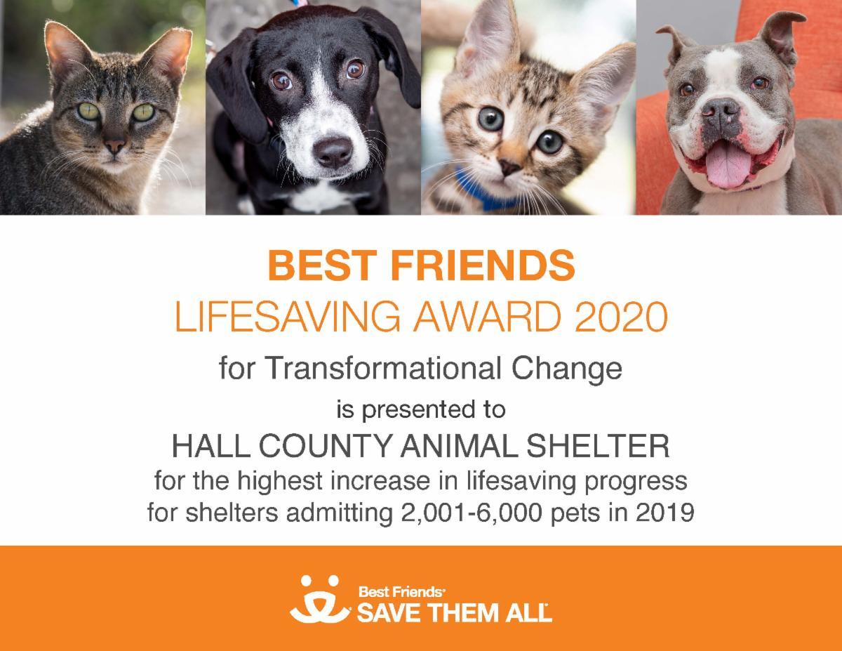 Certificate - Hall County Animal Shelter